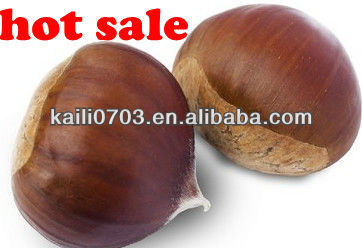 organic nuts wholesale 2013 fresh chestnuts hot sale