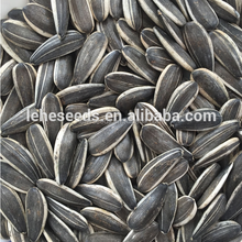 New crop wholesale sunflower seeds 5009