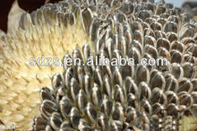new crop High quality American sunflower seed