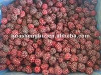 organic IQF frozen black berries