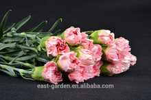 new fresh cut flowers white color carnation for Pakistan