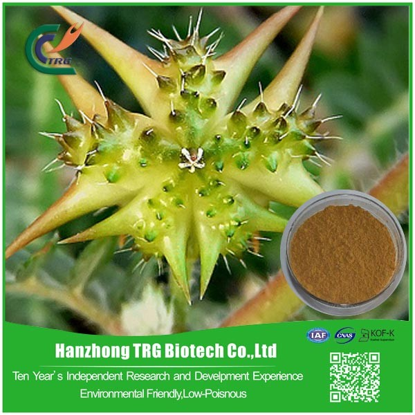 free sample natural saponins gmp tribulus terrestris extract for wholesales