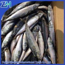 Mackerel Variety and Fish Product Type SEA FOOD