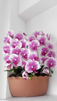 Wholesale Artificial Orchid Flowers Wall Decor Hanging Resin Pot DIY 33 Colors