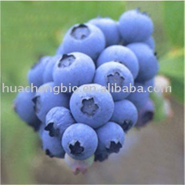 Bilberry extract anthocyanosides/Bilberry concentrate juice