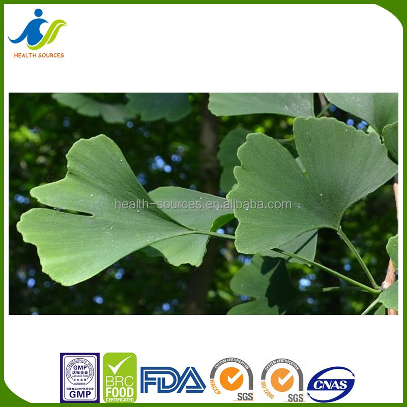 Ginkgo Biloba Extract capsule/pills standardized to 24% flavone glycosides, 6% terpene lactones
