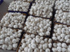 garlic planter for sale business export garlic,jinxiang garlic,dry fresh garlic for crop.chinese garlic