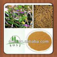 Natural Powder Polygala Extract Herbal Product