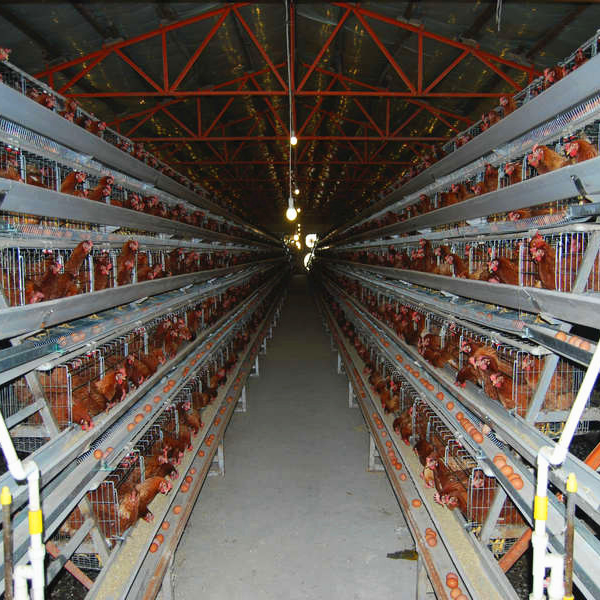 Chicken laying cage/layer egg chicken cage/poultry farm design