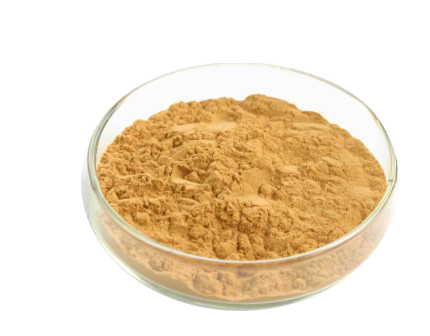 high quality Ginkgo Biloba Plant Extract of Higih Quality