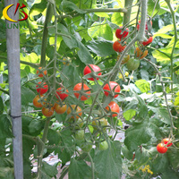 Dome polytunnel gardening ventilation hot dip galvanied frame greenhouse for cherry tomato