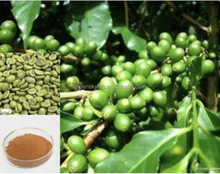 Weight Lossing Green Coffee Bean Extract powder 50% Chlorogenic Acid