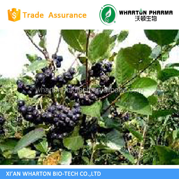 Aronia Chokebrry fruit powder;Natural Chokeberry Extract Chokeberry Fruit Extract Aronia Melanocarpa (Michx.) Elliott