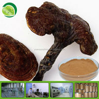 100% Natural 100 Ganoderma Lucidum Extracts
