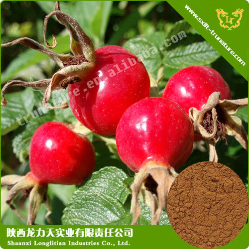 100% Natural Rose Hip Extract Prevent Urinary Bladder Infections