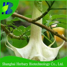 2017 High quality datura seeds for sowing