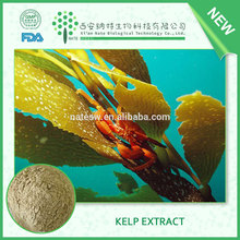 High Quality Fucoidan Powder Extract from Natural Brown Alga