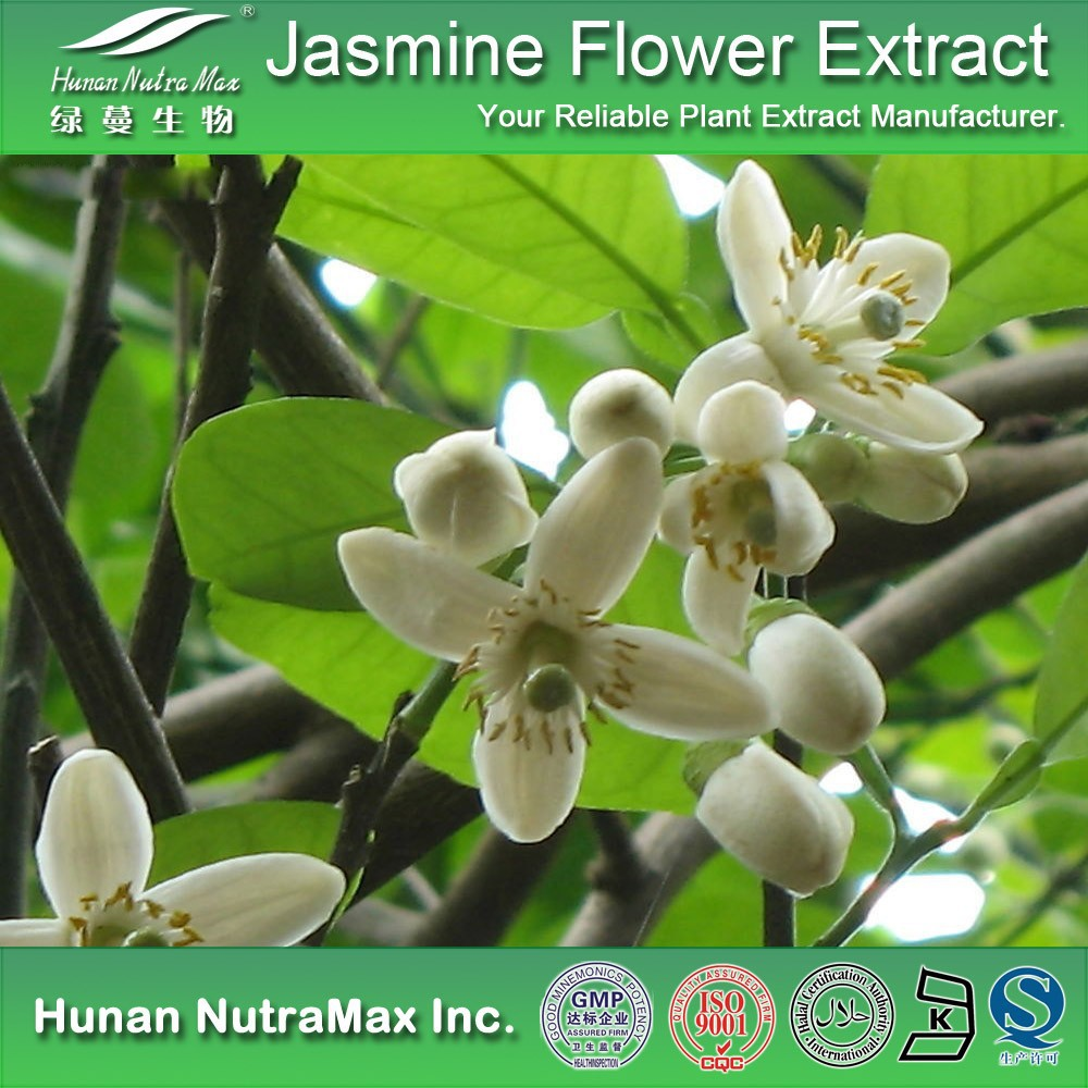 Top Quality Jasmine Flower Extract,Jasmine Flower Extract Powder,Jasmine Flower P.E.