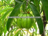 High Quality 100% Natural garcinia cambogia fruit extract