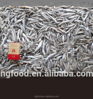 factory price Frozen anchovy fish for fish meal
