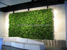 environmental protection succulent living wall green wall vertical system clay soil for sale