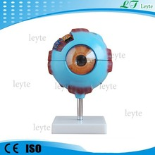 XC-316 PVC human anatomy Giant Eye Model