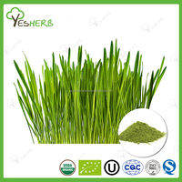 Free Sample Barley Grass Juice Extract Powder