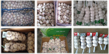 2015 Fresh White Garlic Wholesale Garlic Price