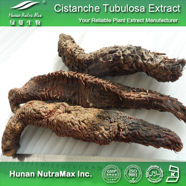 Botanical Extract Cistanche Tubulosa Extract/Cistanche Salsa Extract 4:1-20:1
