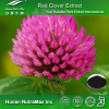 Pure Red Clover Powder,Red Clover Flower Powder,Trifolium pretense Powder