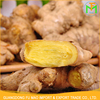 Chinese Professional Shandong Best Quality Fresh Organic Big Size Yellow Ginger For Best Quality