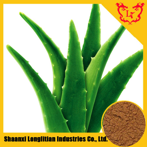 Hot Product Aloe Vera Herbal Extracts / Plantago Asiatica L.