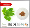 Top selling Natural Lemon Balm Extract/Melissa Extract/Rosmarinic acid Powder 5%, Flavones 3% UV