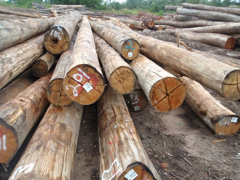 Spotted Gum/Blackbutt/Hoop Pine/Cypress etc Australian Hardwood Logs