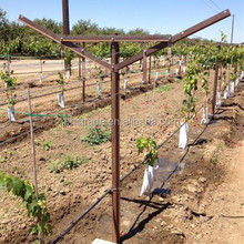 2.4m length,1.5mm thickness piantations vine plants hot dipped galvanized metal vineyard trellis post grape stake