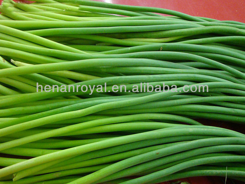2013 New Crop Fresh Green Garlic Sprout