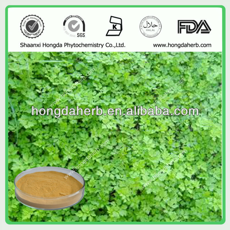 Natural Dong Guai extract