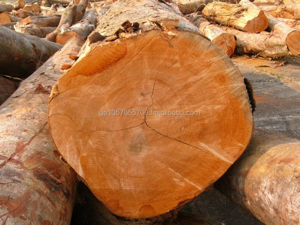 Okoume log and sawn timber