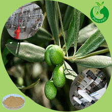 GMP supplier best price olive leaf extract oleuropein & hydroxytyrosol