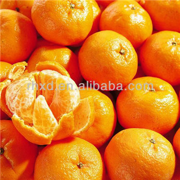 Best quality mandarin fresh juicy navel orange for sale