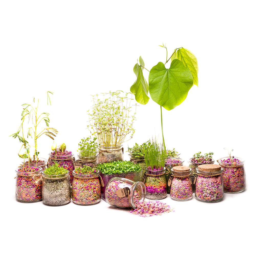 PaperSoil ::new products 2018 innovative product grow Succulent & herbs on paper indoor plant soil creative gift