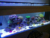 Auto dimming coral reef full spectrum led aquarium light philippines