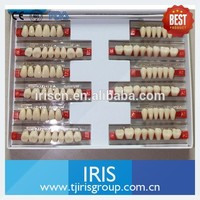 Plastic Teeth Two and Three Layer Color False Acrylic Teeth