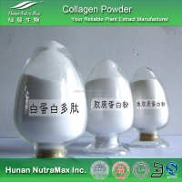 90% Collagen Wholesale, Bovine Collagen