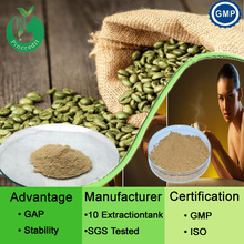 GMP Factory Supply Free Sample Green Coffee Bean Extract Powder