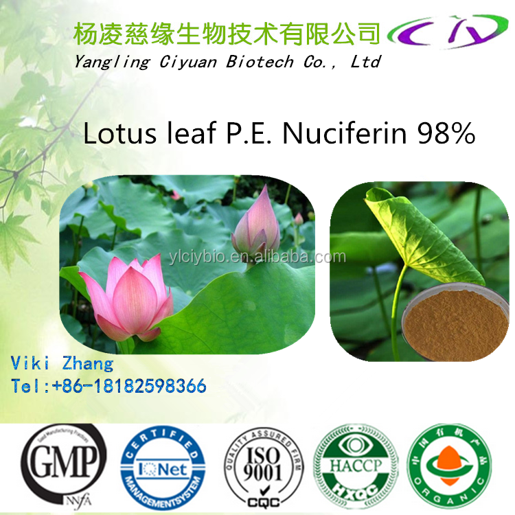 Top quality Lotus Seed Extract Powder / Lotus leaf extract/Lotus leaf P.E. 475-83-2 Nuciferine 98%