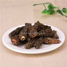 wholesale morel mushrooms dried frozen fresh coral conica morchella fungus
