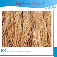 High quality natural plant extract Angelica extract