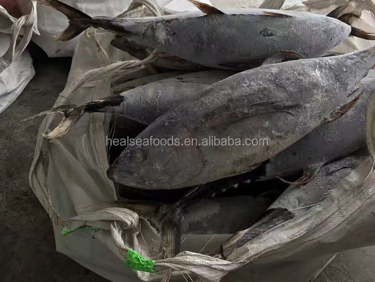 10kg up whole round yellow fin fish frozen tuna