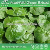 High quality Asari/Wild Ginger Extract,4:1,10:1,CAS No:133-04-0